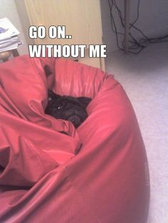 @LauraHelton  I saw this and thought of the picture you posted of Stanley in his new 'borrowed' dog bed