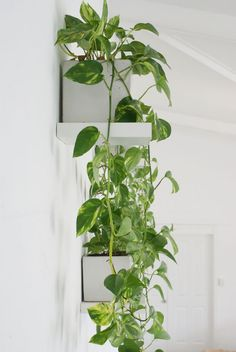 great idea for an office wall .....if we COULD have plants in the office. :-(