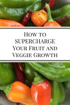 How to Supercharge Your Fruit and Veggie Growth | Nourishing Pursuits | I listed out the three ways we increased our garden productivity so you can have better results as well! These are the tips I wish I knew when I first started gardening.