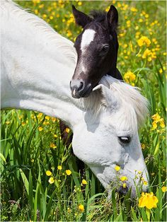Mare and foal...how sweet! Horses are one of the most fabulous creatures on Earth... I just love them!!!