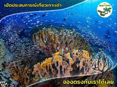 Marine Conservation, Pub Crawl, Beach Bars, Koh Tao, Snorkeling, Scuba Diving, Things To Do, Sunrise, Thailand