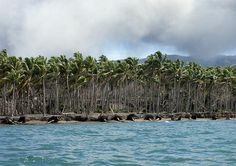 """Climate change in Rabaul - Papua New Guinea  •  When you look at the palms wich are falling into the sea, you better understand the meaning of """"climate change""""..."""