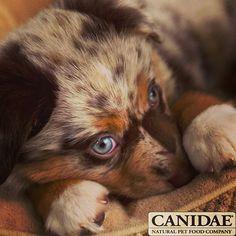 Puppy Cutiest