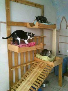 Casa de gatos hecho con madera
