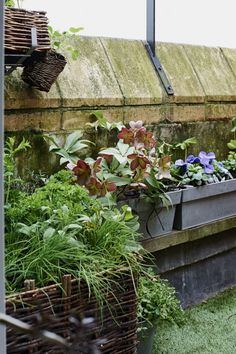 From containers to color palettes, London-based Isabelle Palmer, aka The Balcony Gardener, dispenses invaluable advice on…