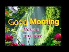 Good morning wishes video whatsapp lovely beautiful videoecard good night song sweet dreams whatsaap video youtube m4hsunfo