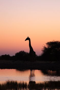**African Sunset  - Explore the World with Travel Nerd Nici, one Country at a Time. http://TravelNerdNici.com