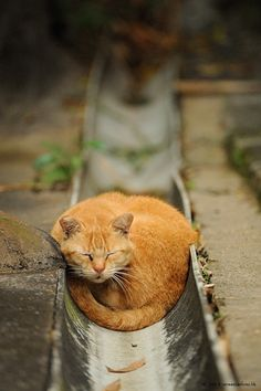 Street+Cat+in+Hong+Kong+by+Micros+Yip+on+500px