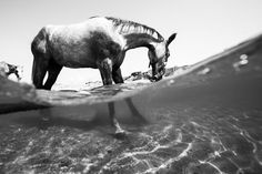 Daily Dozen for June 16, 2016 — Photos -- National Geographic Your Shot