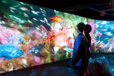 Oakland museum exhibit; video wall with immersive experience of different levels underwater, opens May 31, 2013