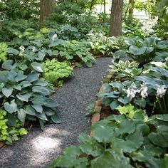 Photo: Alison Rosa | thisoldhouse.com | from Grow a Lush Shade Garden With Hostas