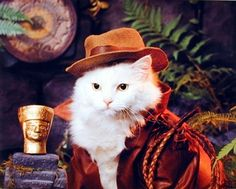 Liven up any room with this funny cat art print poster. This poster captures the image of Indian Jones Cat wearing hat looking very cute and adorable is sure to grab lot of attention. The high quality printing gives this blooming art print poster, vivid and sharp appearance with a high degree of color accuracy creates an elegant look and always stands on test of time. It will be a great gift for every cat lovers. Order this poster today and enjoy your surroundings.