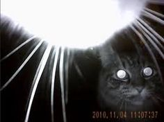 Image result for kitty cam cats eye view