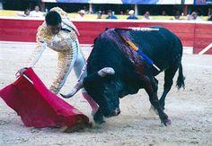 El Zotoluco Was Most Triumphant Matadorlaprensa-sandiego.org Cowboys, Badass, Horses, Animals, Animales, Animaux, Horse, Words, Animal