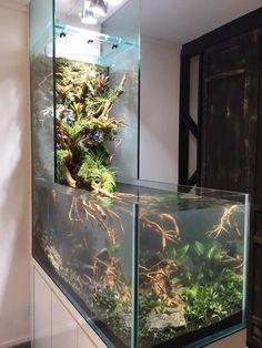 10 Tips on Designing a Freshwater Nature Aquarium Fish Tank Terrarium, Aquarium Terrarium, Diy Aquarium, Aquarium Design, Planted Aquarium, Wall Aquarium, Aquarium Garden, Aquarium Ideas, Chinese Water Dragon
