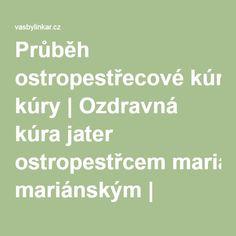 Průběh ostropestřecové kúry | Ozdravná kúra jater ostropestřcem mariánským | vasbylinkar.cz