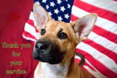 memorial day dog photos