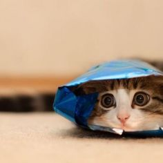 they'll never find me!