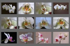 Twelve #Orchid - inspiring #flowerphotography >>> http://goo.gl/8yhqeE