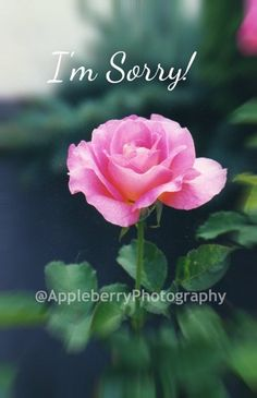 I'm Sorry Photo Greeting Card | AppleberryPhotography - Cards on ArtFire
