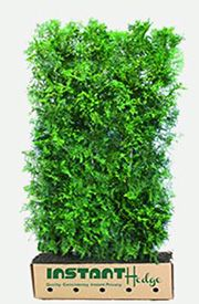 Thuja Occidentalis is a popular evergreen privacy hedge. American Arborvitae Makes a tall, dense, fast-growing screen with a dark green color all year. Privacy Hedges Fast Growing, Fast Growing Hedge, Fast Growing Evergreens, Green Giant Arborvitae, Arborvitae Tree, Emerald Green Arborvitae, Privacy Landscaping, Privacy Shrubs, Gardens