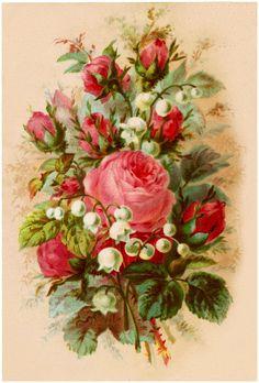 43 Pink Rose Images!
