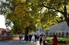 Roheline ring ümber Tallinna vanalinna   Bioneer Street View, Rings, Ring, Jewelry Rings