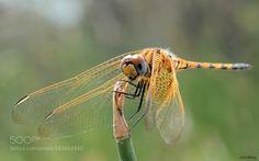 Balance by Uri_Almog #nature #photooftheday #amazing #picoftheday