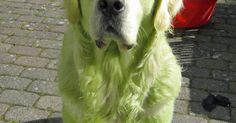 This Is Why You Don't Let Your Dog Roll Around In Freshly Cut Grass