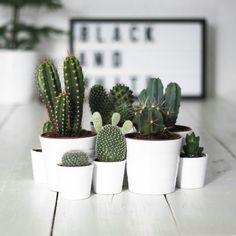 Cactus mooi bij elkaar in de zelfde kleur potten
