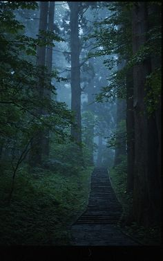 'Haguro-san Pathway,' the stone-lined Ishi-Dan path in a dense forest of cedar trees on Mt. Haguro-san, Tsuruoka, Japan | Anna Planedin (curious_bird), on Flickr. (More info: http://sacredsites.com/asia/japan/haguro_san.html.)