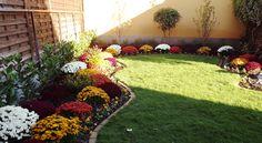 Wonderful autumn colours- chrysanthemum mums flower bed