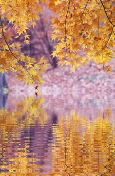 ~~Pale and golden yellow ~ autumn leaves reflections by Dekka~~