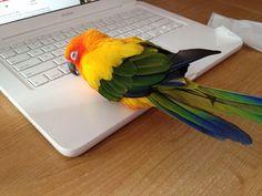 You say $2000 Facebook machine, I say $2000 bird warmer. - Imgur