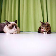 Grumpy & BUB