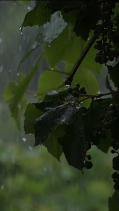 Mantenha o foco com som de chuva. Vídeo completo em nosso canal no Youtube. Beautiful Scenery Pictures, Cool Pictures Of Nature, Beautiful Photos Of Nature, Amazing Nature, Night Scenery, Rain Photography, Creative Photography, Aesthetic Photography Grunge, Nature Gif