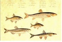 Vintage marine life postcard