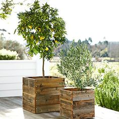Williams-Sonoma Home Reclaimed Square redwood planters add a rustic feel to the outdoors.