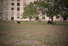 #Croazia #dog #play #travel #vsco #gurusays