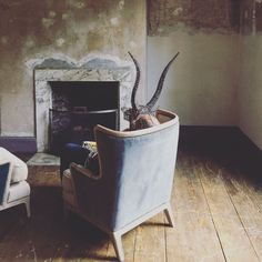 Take a sneak peek behind the scenes, on location for our Christmas 2017 catalogue photoshoot Eclectic Furniture, Unique Furniture, Christmas 2017, Behind The Scenes, Photoshoot, Rugs, Home Decor, Farmhouse Rugs, Decoration Home