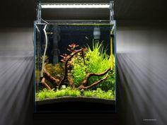 acquario di Baraka