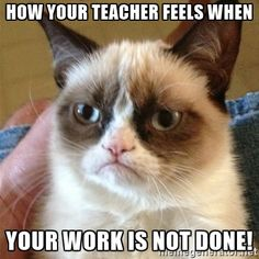 Grumpy Cat  - How your teacher feels when your work is NOT DONE!