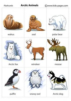 Walrus, Seal, Polar Bear, Arctic Fox, Reindeer, Moose, Puffin, Snowy Owl, Arctic Dog