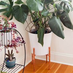 Make a simple copper plant stand out of copper pipes. No power tools required.