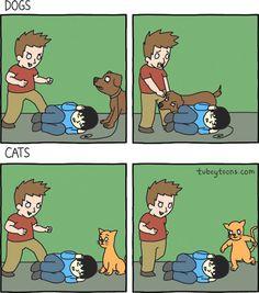 Perros y gatos: diferencias. #humor #risa #graciosas #chistosas #divertidas