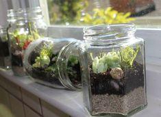 How to Make a Terrarium: How To Make A Terrarium With Glass Jar Terrarium Design For Window Sill Decor Terrarium Diy, Terrarium Containers, How To Make Terrariums, Glass Containers, Making A Terrarium, Small Terrarium, Small Glass Jars, Cactus Y Suculentas, Edamame