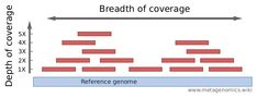 Coverage (read or sequencing depth) - Metagenomics Next Generation Sequencing, Genome Sequencing, Definitions, Bar Chart, Reading, Bar Graphs, Reading Books