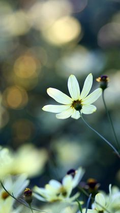 White Small Flowers #iPhone #5s #Wallpaper | Pin what you like .