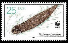 Vom Aussterben bedrohte Tiere - Fischotter