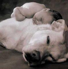 20 Adorable Photos of Dogs As Pillows